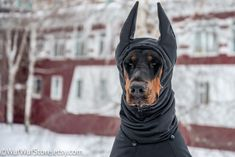 """Lol I have never seen a Doberman wearing a hoody too funny. This is what my """"cold nature"""" Doberman needs! Canis Lupus, Doberman Pinscher Dog, Doberman Puppies, Doberman Love, Doberman Funny, Dog Winter Coat, Autumn Coat, Dog Coats, Looks Cool"""