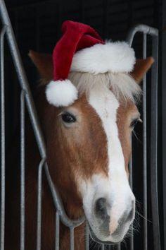 Christmas Horses by webworm on DeviantArt