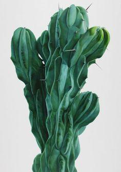 Lee Kwang-Ho Cactus (oil on canvas)