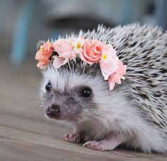 Hedgehog wearing a flower crown!