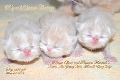 Royal Rascals in the nursery
