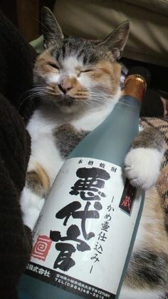 Those Asian cats sure know how to party!!!