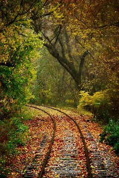 Autumn Express by Chad Brackeen, via Flickr#Repin By:Pinterest++ for iPad#