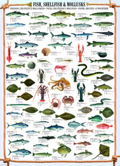 EuroGraphics Fish Shellfish Mollusks 1000-Piece Puzzle. Over 50 fish, shellfish and mollusks are illustrated here with fun facts such as length and weight. The names of which appear in English, French, German and Spanish.