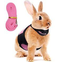 Bunny Harness, Baby Needs, Fur Babies, Rabbit, Amazon, Pets, Outdoors, Animals, Group