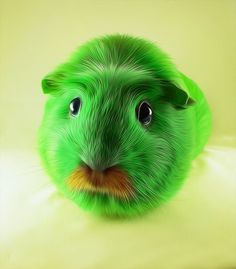Moustache (guinea) pig by *mohamedraoof on DeviantArt. Wow this is weird!