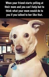Funny Pictures You're Going To Love