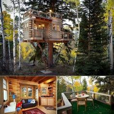 Tree House for Adults