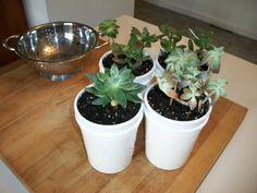 A Joyful Girl: DIY Plant Containers - 0 Dollars!
