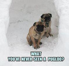 Funny Pug Dog Meme Pun.