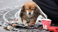 Pétition · Stop au trafic et à l'exploitation des animaux à des fins de mendicité · Change.org