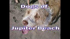 Dogs of Jupiter Beach