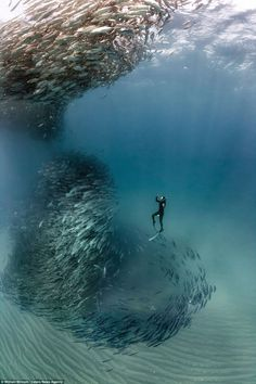 Incredible photographs show a school of fish forming a 'tornado'