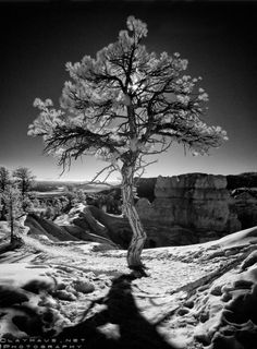 Infrared photo by Jeff Clay