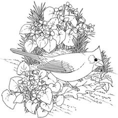 Northern Cardinal And Violet Illinois Bird Flower Coloring Page