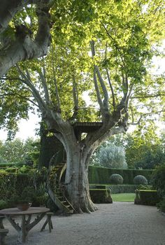 Love the spiral staircase to the tree house. And what a perfect tree! Beautiful and Inspiring Provence Garden Dream Garden, Garden Art, Garden Trees, Garden Tree House, Boxwood Garden, Fence Garden, Provence Garden, Garden Structures, Garden Spaces