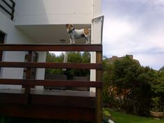 I have a crazy dog, he did this to get my attention Crazy Dog, Paths, Garden, Dogs, Garten, Lawn And Garden, Pet Dogs, Gardens, Doggies