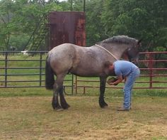 Liam: Draft, Horse; Cambridge, OH