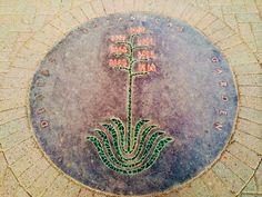 Desert Botanical Gardens, Scottsdale