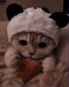 Funny Cute Cats, Cute Baby Cats, Cute Cats And Dogs, Cute Funny Babies, Kittens Cutest, Funny Cat Wallpaper, Cute Panda Wallpaper, Super Cute Animals, Cute Little Animals