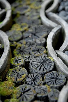 Chrysanthemum charcoal. Charcoal used during the Japanese tea ceremony sometimes have a beautiful design, such as chrysanthemum. Japan.