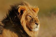 Resultado de imagen de león