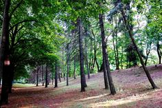 city park by Zbigniew Włodarski on 500px, fotografia została wykonana aparatem Samsung NX30, otrzymanym od Samsung Electronics. Co., Ltd. #SamsungNX30 #NX30 #ZbigniewWłodarski