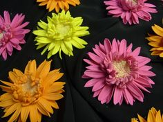 Hey, I found this really awesome Etsy listing at https://www.etsy.com/listing/71517160/sugar-gumpaste-gerber-daisy-edible