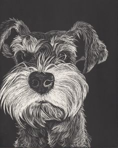 Cute Pet Portrait Do you want an awesome schnauzer? Then adopt one from a shelter or at www.petfinder.com!