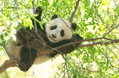 Mr. Wu in the treetops by Rita Petita, via Flickr