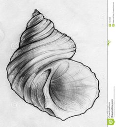 Done Sea Shell Sketch Stock Illustration - Image: 44318008