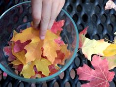 Preserving leaves: let leaves soak in 2 parts water to 1 part glycerin for 2 to 4 days, then air dry to preserve for Fall decorating.