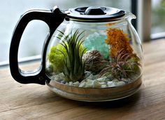 This colorful terrarium is such a fun and clever way to repurpose an old coffeepot.