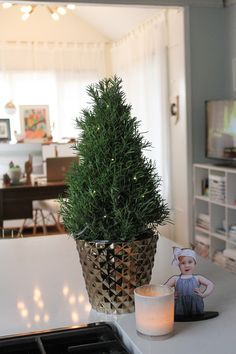 Join me on an overly honest holiday home tour of our fixer upper! I love this Rosemary plant from @proflowers ! Smells so good!