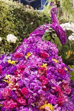 beautiful peacock made from flowers Stock Photo Topiary Garden, Garden Art, Garden Plants, Garden Design, Topiaries, Rare Flowers, Beautiful Flowers, Amazing Gardens, Beautiful Gardens