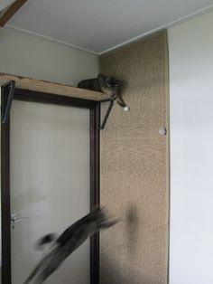 Climbing wall for cats – IKEA Hackers – Linda Sharpe – Cat playground outdoor Diy Kallax, Cat Climbing Wall, Ikea Cat, Closet Ikea, Cat Wall Shelves, Kitchen Ikea, Warrior Cats Books, Diy Cat Tree, Decoration Ikea