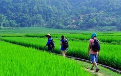 Vietnam trekking tours in 10 days are great trekking tours in Vietnam offer adventure trekking tours in Northern Vietnam. Enjoy trekking tours in Vietnam