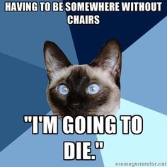 Chronic Illness Cat (though truth be told, more like beds instead of chairs)