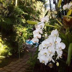 Nosso jardim! #pousadaouroparaty #paraty #historiccenterparaty #paraty #rj #pousadaoficialdaflip