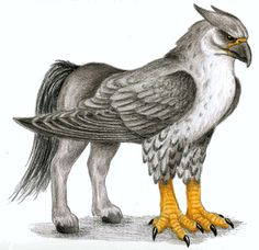Hippogriff the Half Eagle and Half Horse Bird