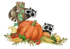 Racoons in the pumpkin patch