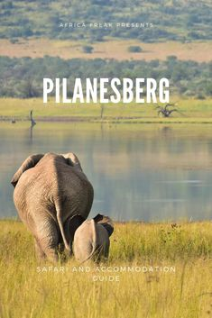 "Are you looking for your next safari destination? Pilanesberg Game Reserve might just be the perfect spot for you. It is a fantastic getaway, especially if you're staying in the Gauteng area and are short on time. The park is in the Bojanala Region in the North West Province of South Africa. It is only about one and a half hours away from Johannesburg and is next to the famous ""Sun City"" complex."
