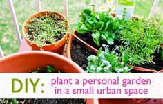 Many people complain they can't grow their own food because they lack garden space, but you can grow more than you realize in small areas as long as there's a bit of direct sun. Whether you have a little concrete slab behind your house, a fire escape outside your window, or even a tiny balcony, your urban garden can be a veritable Eden of fresh, healthy, home-grown vegetables & herbs. Small Space Gardens http://www.pinterest.com/wineinajug/small-space-gardens/
