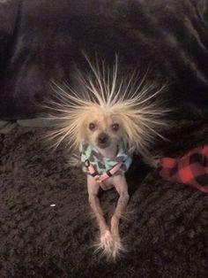 Hairless dog - 5 Fun Dog Activities For A Rainy Day Funny Animal Jokes, Funny Dog Memes, Cute Funny Animals, Baby Animals Pictures, Cute Animal Pictures, Funny Animal Pictures, Ugly Baby Pictures, Baby Animals Super Cute, Cute Little Animals