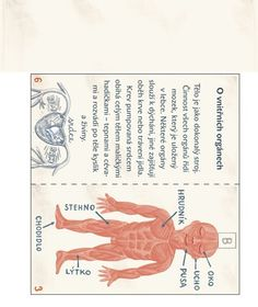 atlas lidského těla 2 Human Body, Montessori, Rv, Crafts For Kids, Halloween, School, Health, Science, Biology