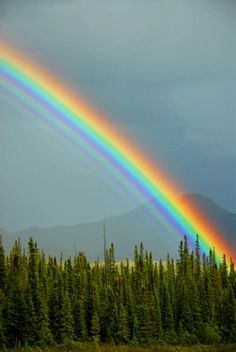 Simply beautiful! God's promise!
