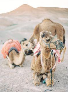 Moroccan Dessert   Baby & Poppa Camel   Marrakech   JenHuangBlog.com