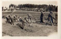 Photo 8e RAC - Prisonniers réparant la route de VALMY à HANs Marne 1914 1918