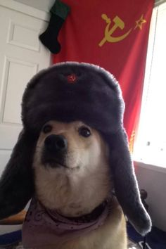 In soviet doge, wow is much than the single doge. wow