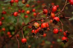 Awesome blog for local wild food and foraging
